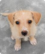 Tiervermittlung Aktion Tiere In Not